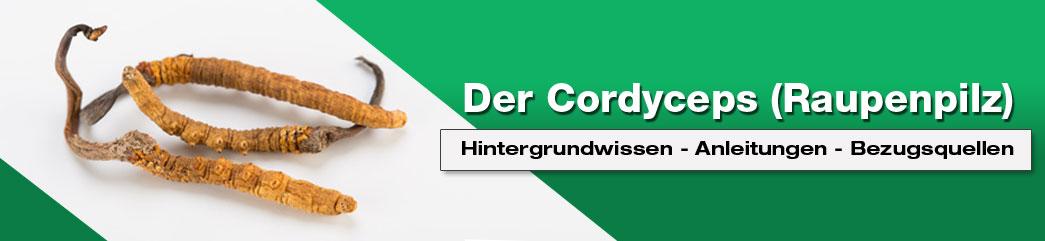 cordyceps sinensis nebenwirkungen